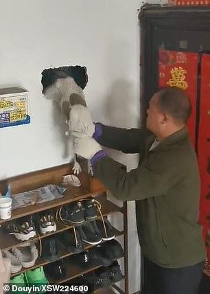 Wstrząsające odkrycie. Pies uwięziony był w ścianie w jednym z domów w Chinach