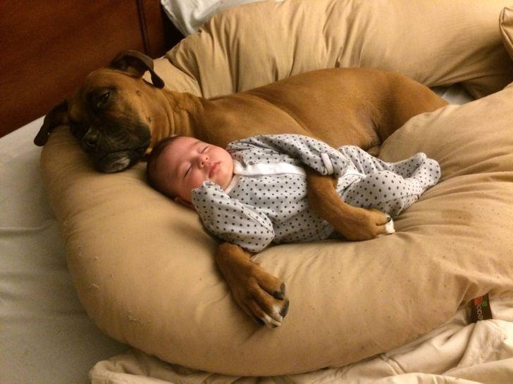 Zwierzaki i ludzie są jak przylepki i najchętniej nigdy by się nie rozstawali. Oto 20 dowodów