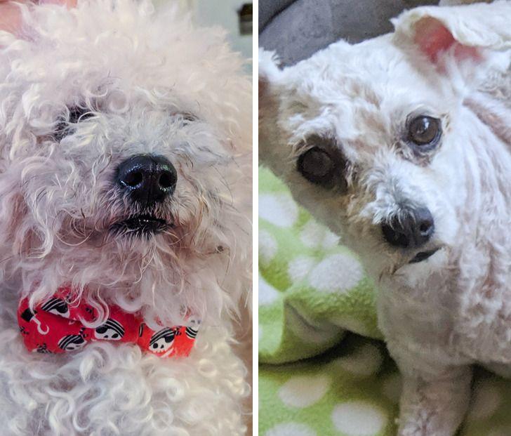 20 ludzi, którzy po wizycie u fryzjera otrzymali zupełnie innego psa