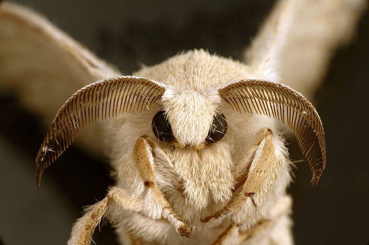 Matka Natura była w mocno twórczym nastroju, kiedy tworzyła te 13 owadów