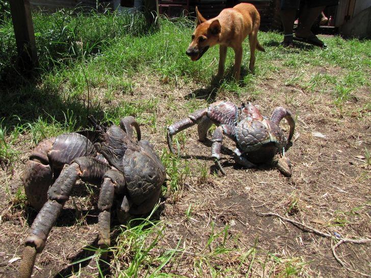 20 zwierząt, których rozmiary przekraczają nasze pojęcie