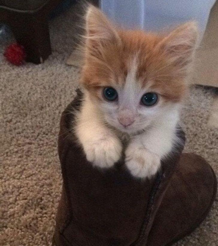 19 kociaków, które potrafią uleczyć zdrowie i duszę z wszelkich smutków