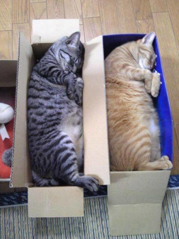 30 razy, kiedy ludzie przyłapali swoje koty śpiące w przedziwnych pozycjach