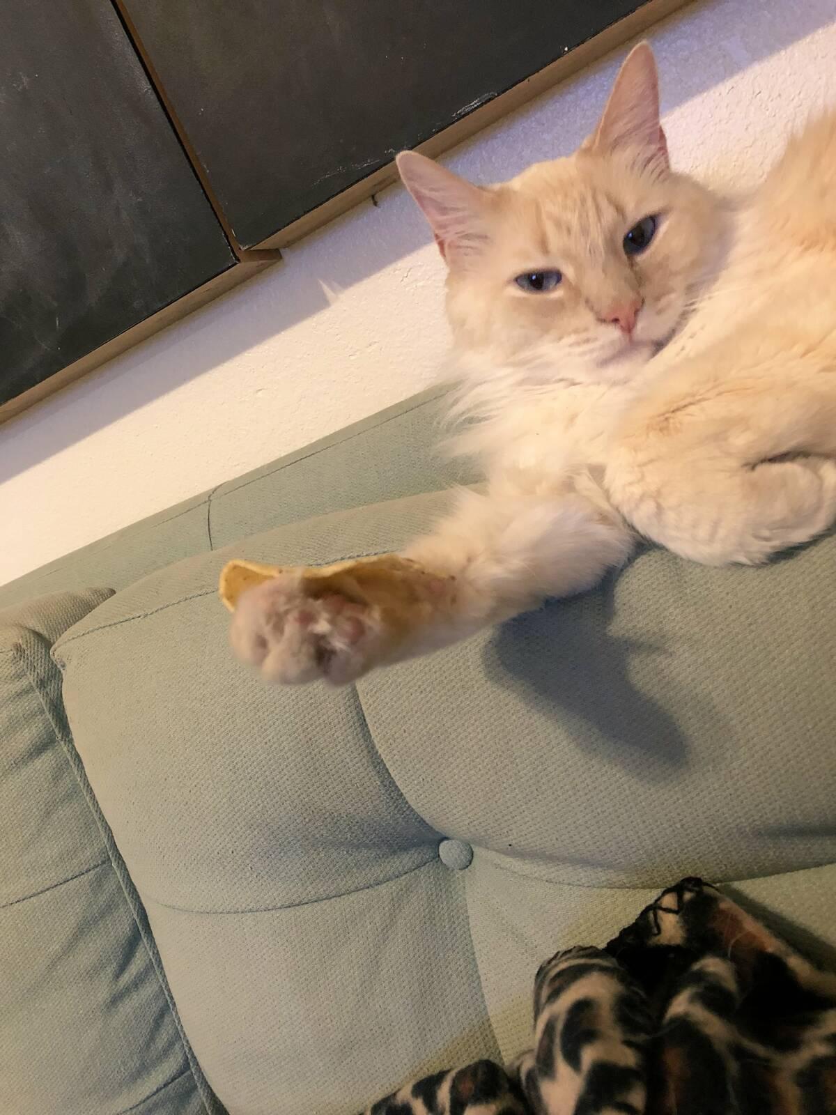12 zdjęć doskonale ukazujących koty będące kotami