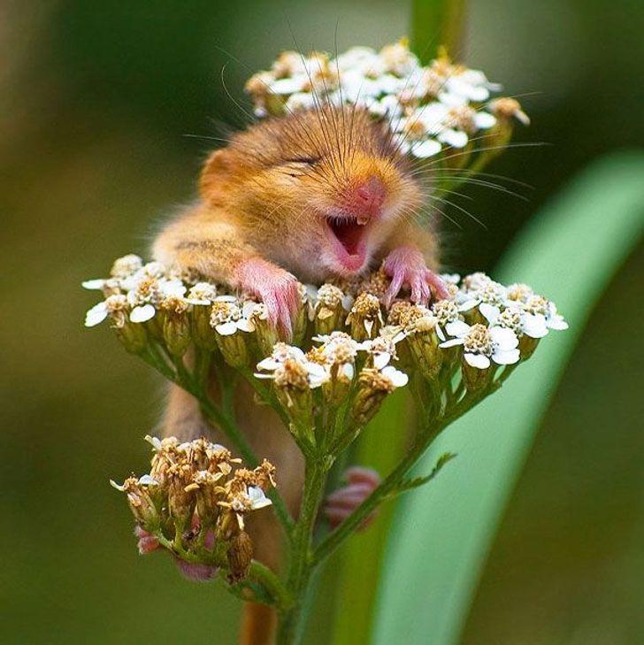 21 zwierzaków, które zarażają szczęściem i pozytywną energią
