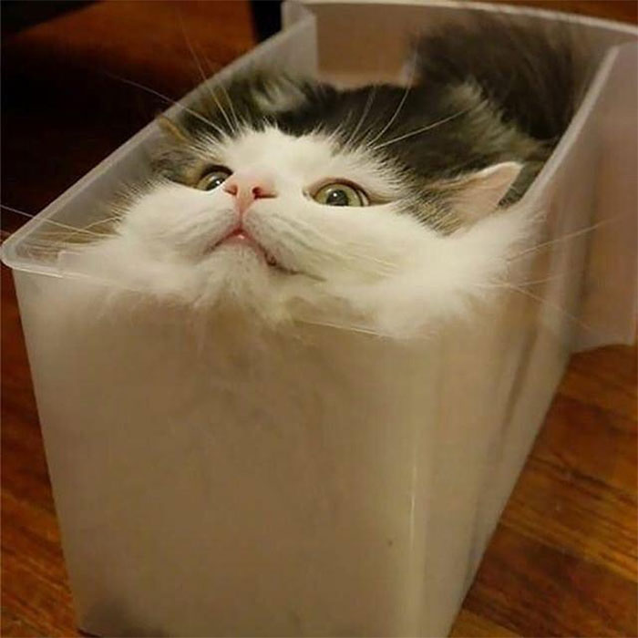 30 zdjęć kotów w miejscach, w których nigdy nie powinny się znaleźć