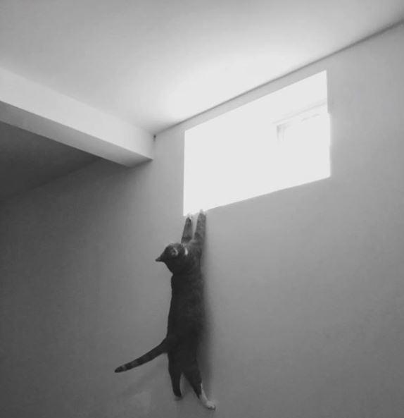 15 kotów, które dały ciała, ale w możliwie najbardziej zabawny sposób