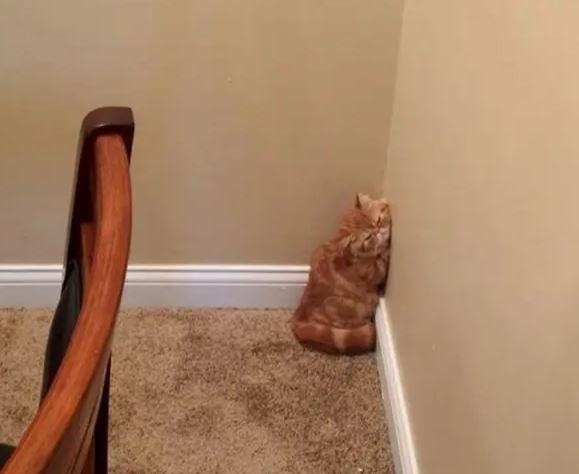 18 fotek, które dowodzą, że koty to największe dziwaki na tej planecie