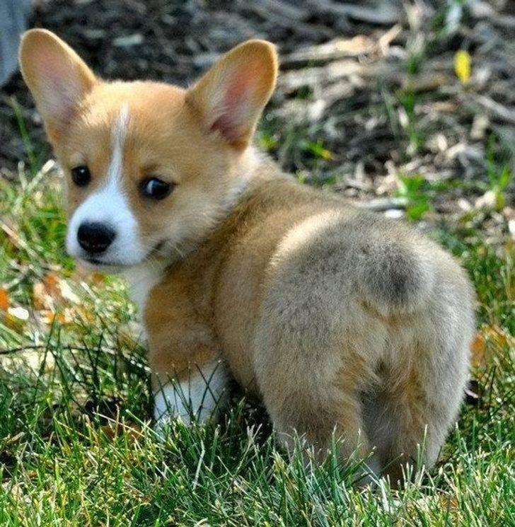 21 puszystych zwierzątek, które wyglądają tak uroczo, że można je pomylić z pluszakami