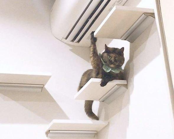 17 kotów, które powinny jak najszybciej udać się na wizytę do psychologa