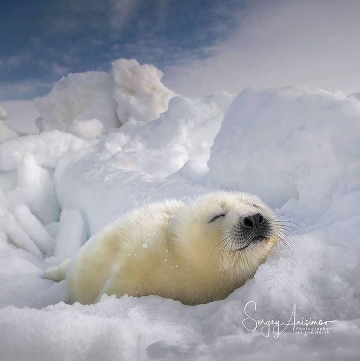 25 polarnych zwierzątek, które ogrzewają serca nawet w ekstremalnie niskich temperaturach