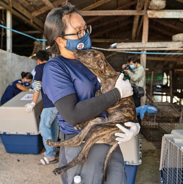 61 psów, ściśniętych w malutkich klatkach, zostało uratowane w drodze do rzeźni