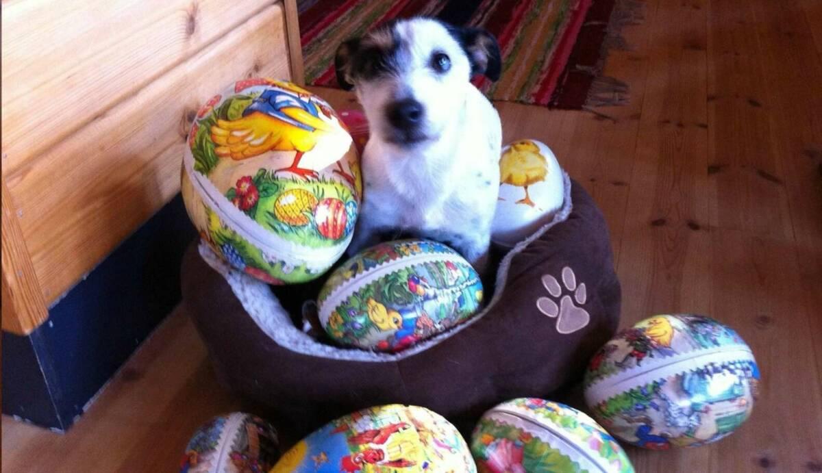 16 zwierząt, które spędzają przedziwną Wielkanoc