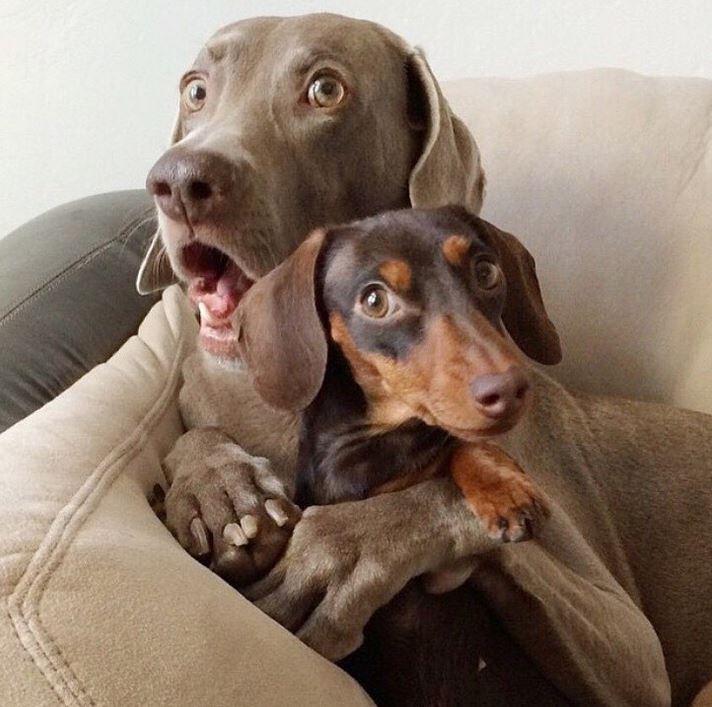 20 zwierzaków, które zachowują się zupełnie jak ludzie i to tak zabawne, że aż boli