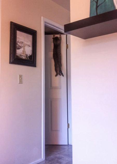 17 kotów, które są tak głupiutkie, że aż leżymy ze śmiechu