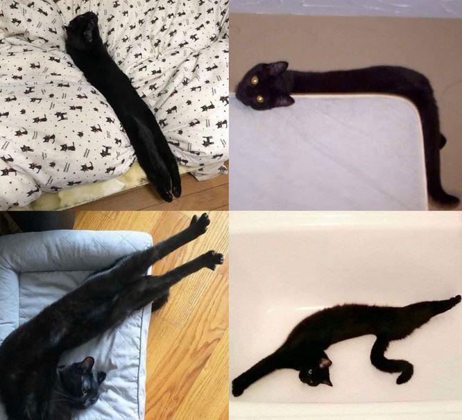 18 kociaków, które roztopiły się niczym masełko na patelni