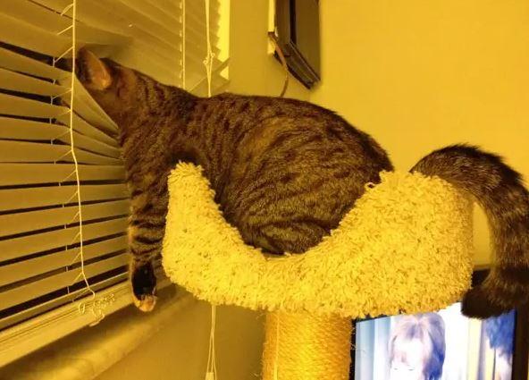 17 kotów, które mają wszystko gdzieś. To one rządzą