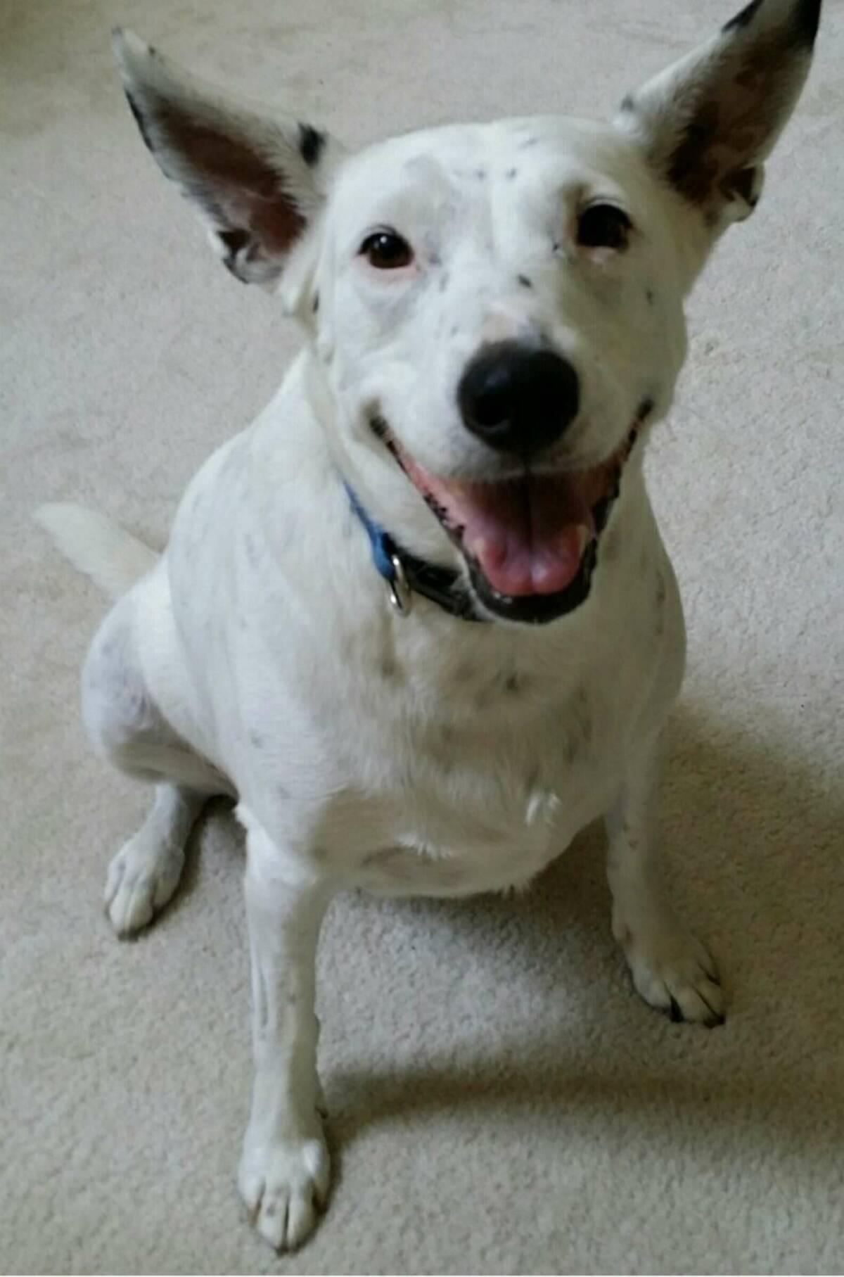 Głuchy pies, który nigdy nie słyszał szczekania, wymyśla swój własny sposób mowy