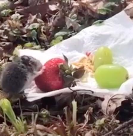 Uratowała malutką myszkę i zaprosiła ją na najsłodszy mini piknik