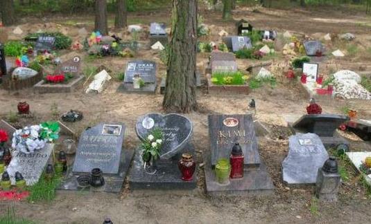 Płock: powstanie cmentarz dla zwierząt? Pojawiła się inicjatywa