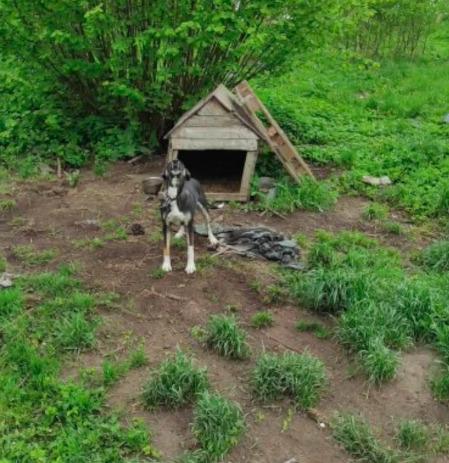 Dramat w gminie Bisztynek. Wyprowadzili się z domu, a swoje psy skazali na pewną śmierć