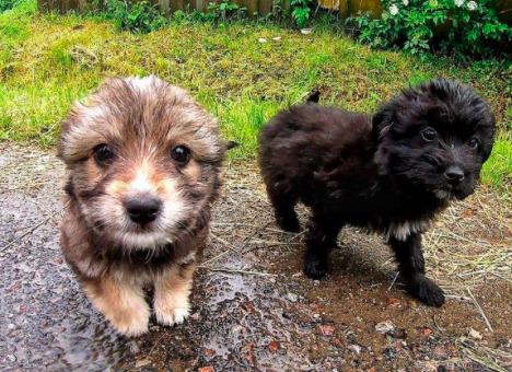 Dwa malutkie szczeniaki porzucone przy drodze. Bezskutecznie próbowały schronić się przed ulewą