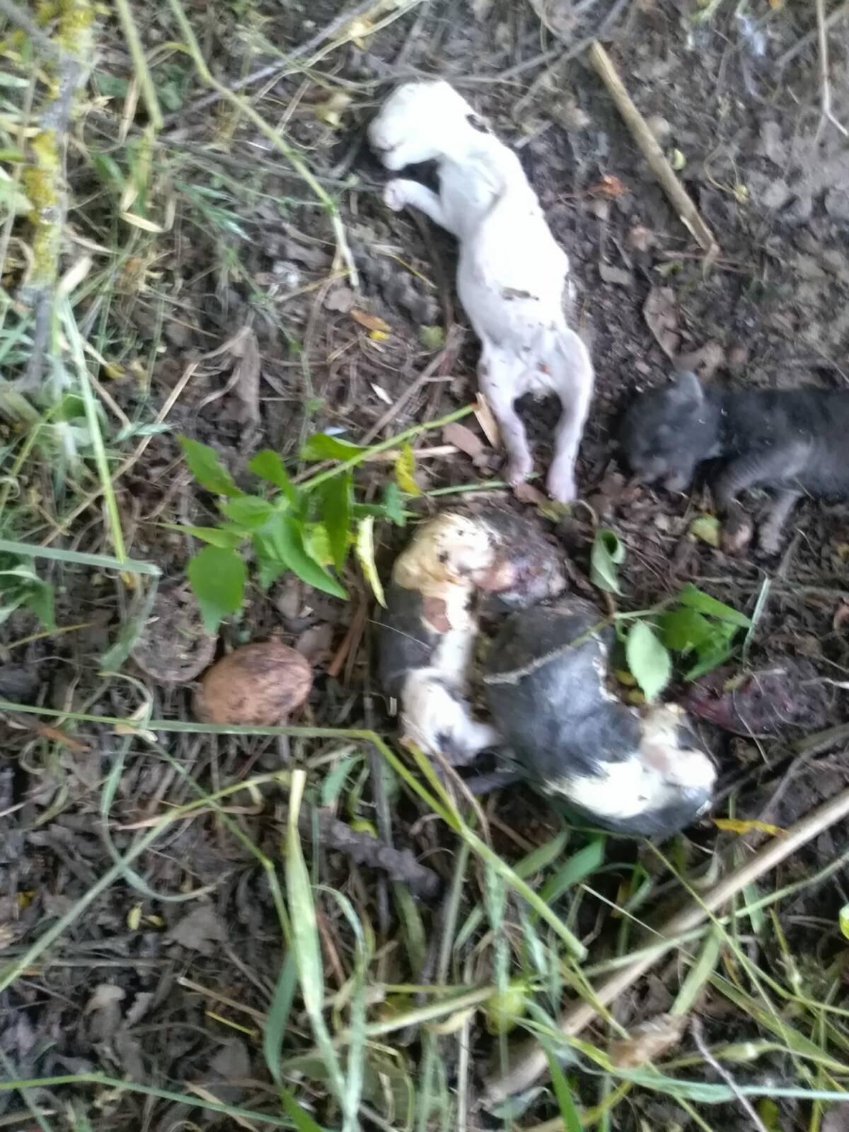 Jabłkowo: Znaleziono 5 martwych kociąt obok placu zabaw. Ktoś wyrzucił je tuż po porodzie