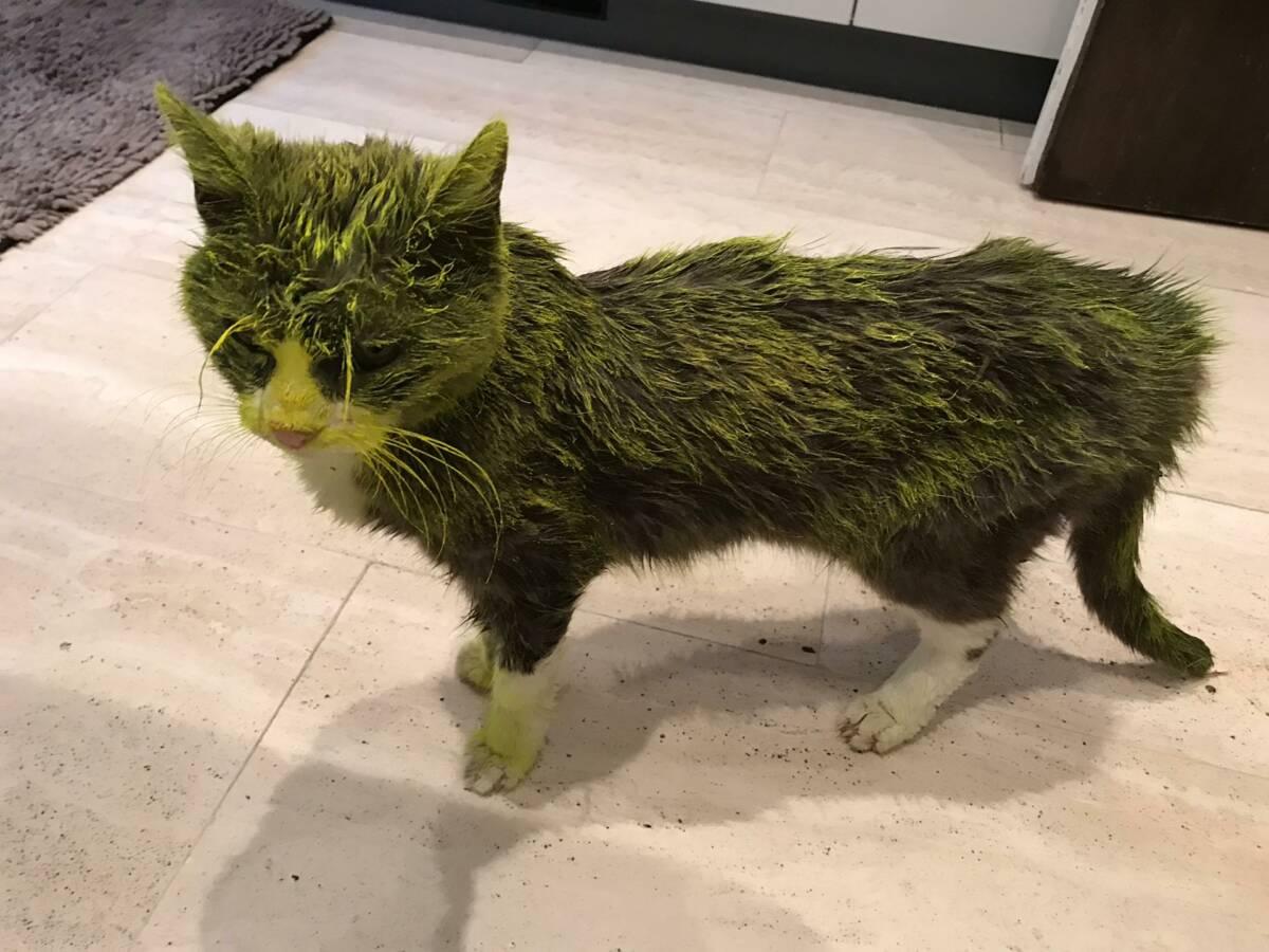Ktoś oblał kotkę żółtą farbą. Finał okazał się być tragiczny