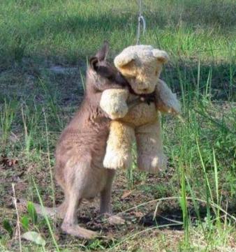 Osierocony kangurek czule przytulał się do pluszowego misia. Poruszył serca wielu internautów