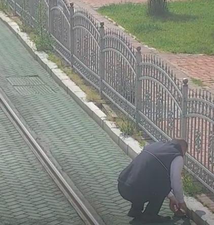 Motorniczy zatrzymał tramwaj, aby uratować żółwia. Zwierzak utknął na torowisku