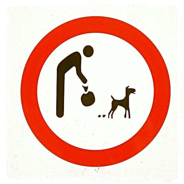 Tel Awiw chce obowiązku rejestrowania DNA psów, aby władze mogły zidentyfikować porzuconą kupę