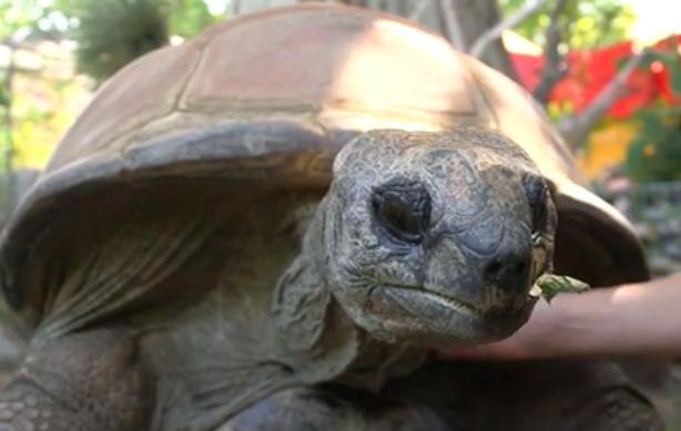 Zmarł 130-letni żółw Schurli. Gad stał się sławny podczas EURO 2016