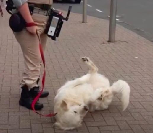 Ochroniarz widział, że pies moknie przed sklepem. Rozstawił nad nim swój własny parasol