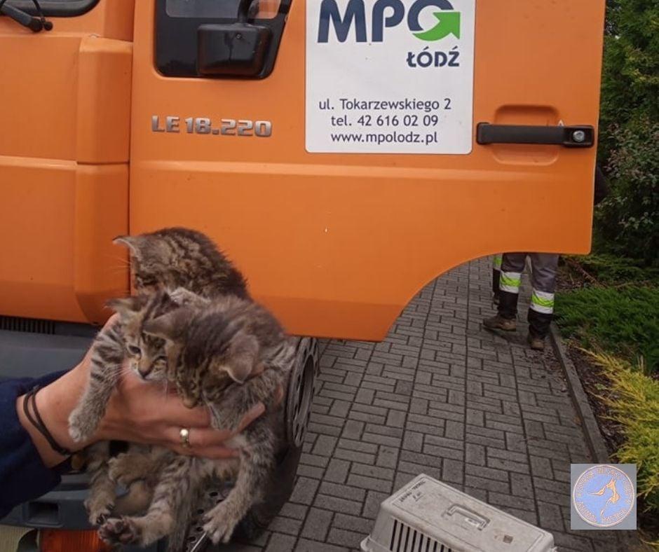Łódź: Usłyszeli straszliwy płacz ze śmietnika. W środku znajdowały się 3 przerażone kotki