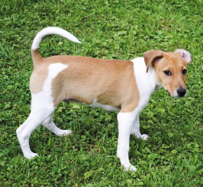 Zaginiony na wakacjach pies przebiegł ponad 400 km i odnalazł drogę do swojego domu