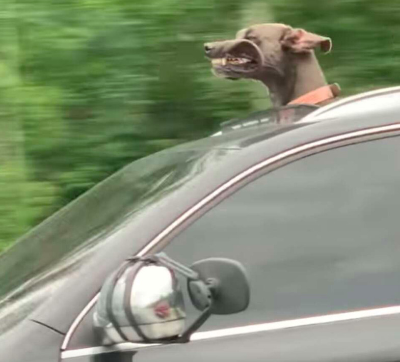 Myśleli, że pękną ze śmiechu, gdy spojrzeli na jadący obok z nich samochód