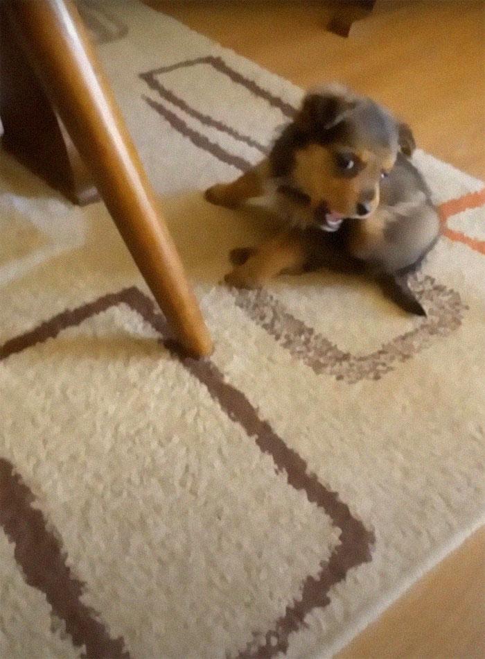 Malutki szczeniaczek porzucony jak niepotrzebny śmieć. Używał starego buta jako schronienia