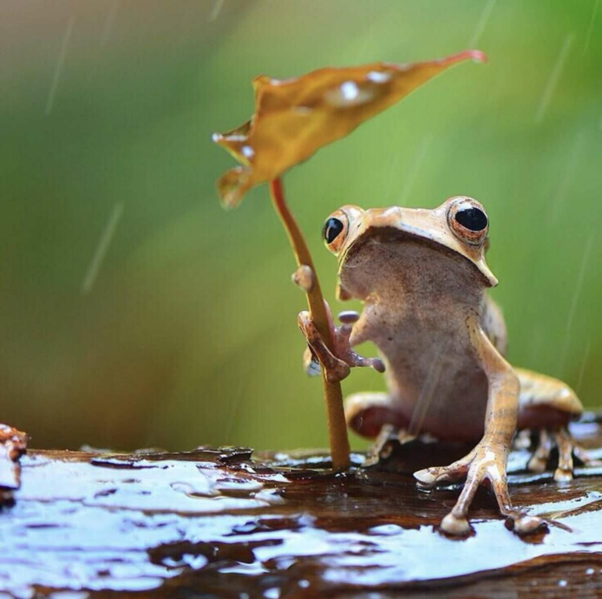 Niezwykła scena z udziałem dwóch żab. Takie ujęcie zdarza się raz na milion