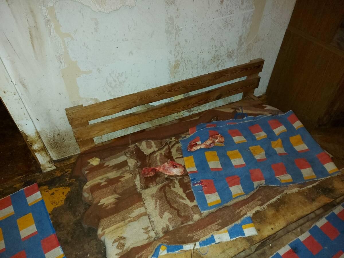 Horror w hodowli zarejestrowanej w ZKwP. Zadbane były tam tylko puchary i medale