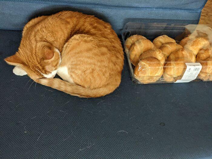 25 najlepszych zdjęć kotów znalezionych w Internecie