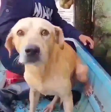 Łamiący serce filmik z powodzi. Przerażony piesek resztkami sił trzymał się poręczy balkonu