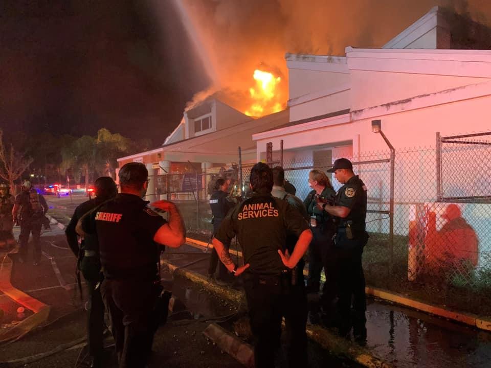 Gigantyczny pożar w schronisku dla zwierząt. Są ofiary śmiertelne