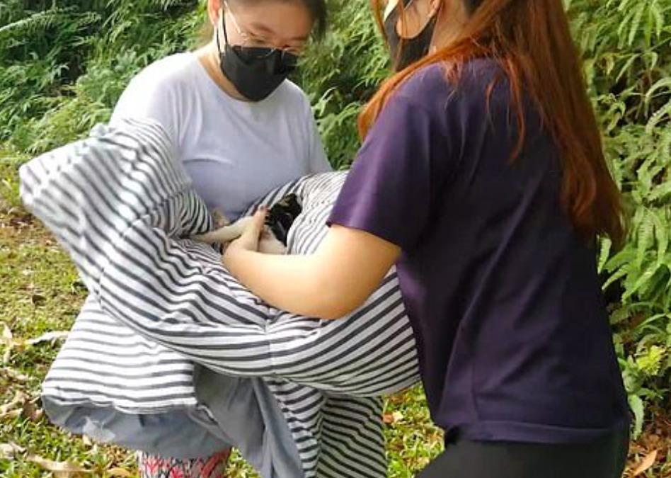 Dzika małpa porwała małego szczeniaczka i przetrzymywała go jako zakładnika