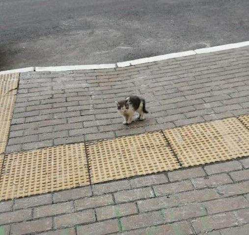 Mały kotek codziennie siadał na krawężniku i czekał. Powód łamie serce