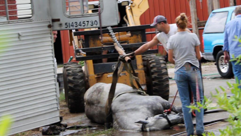 Oto zdjęcia, które raz na zawsze zniechęcą każdego do korzystania z konnych powozów
