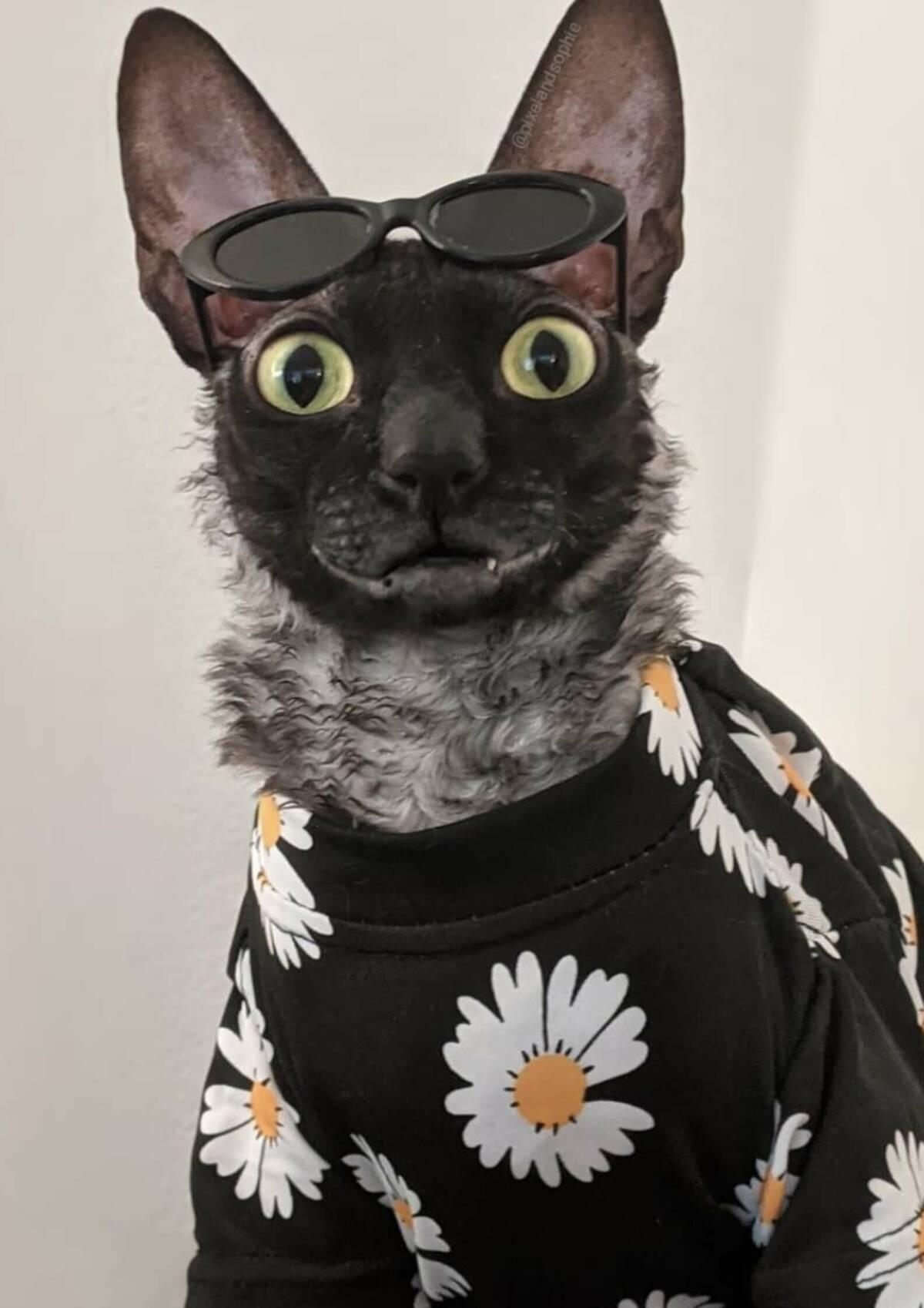 Pixel to kot z najlepszym uśmiechem pod słońcem. Futrzak stał się gwiazdą Internetu