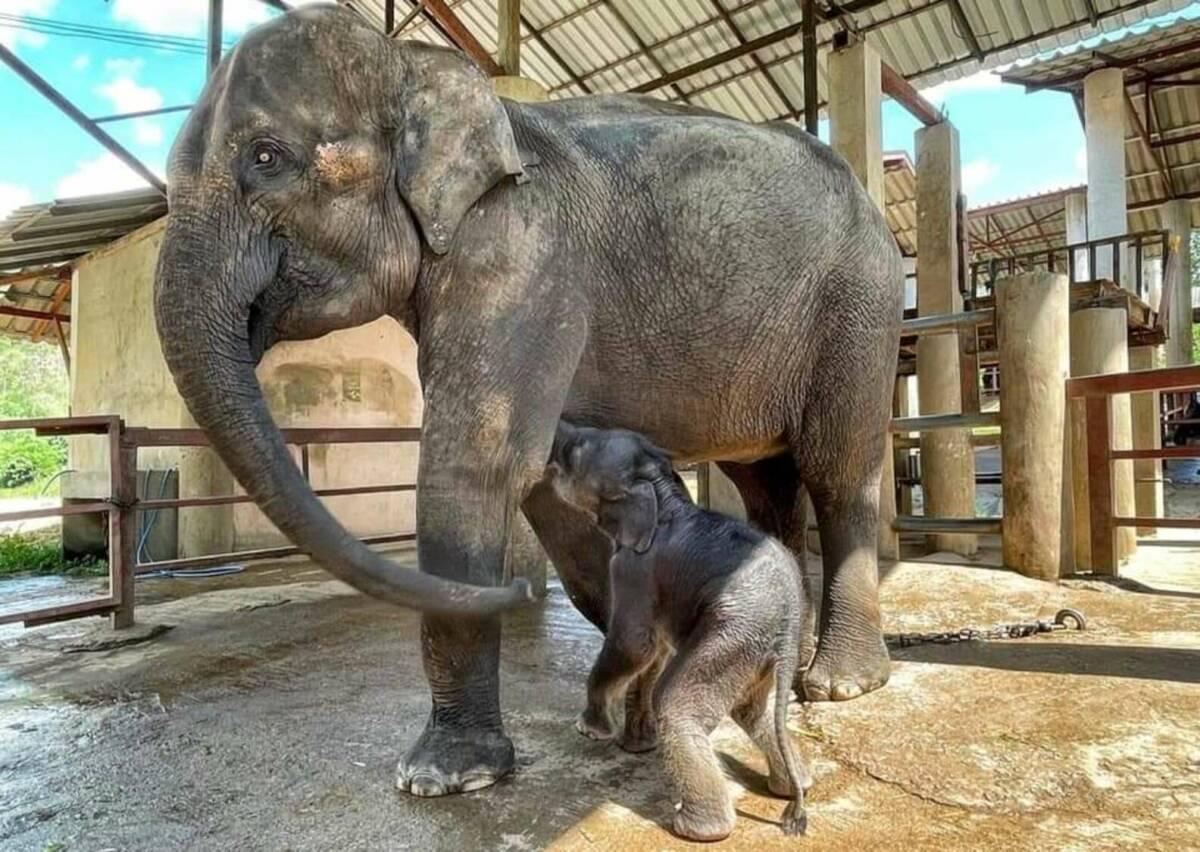 Uratowany mały słonik cieszy się swoją pierwszą kąpielą. Widok, który stapia serca