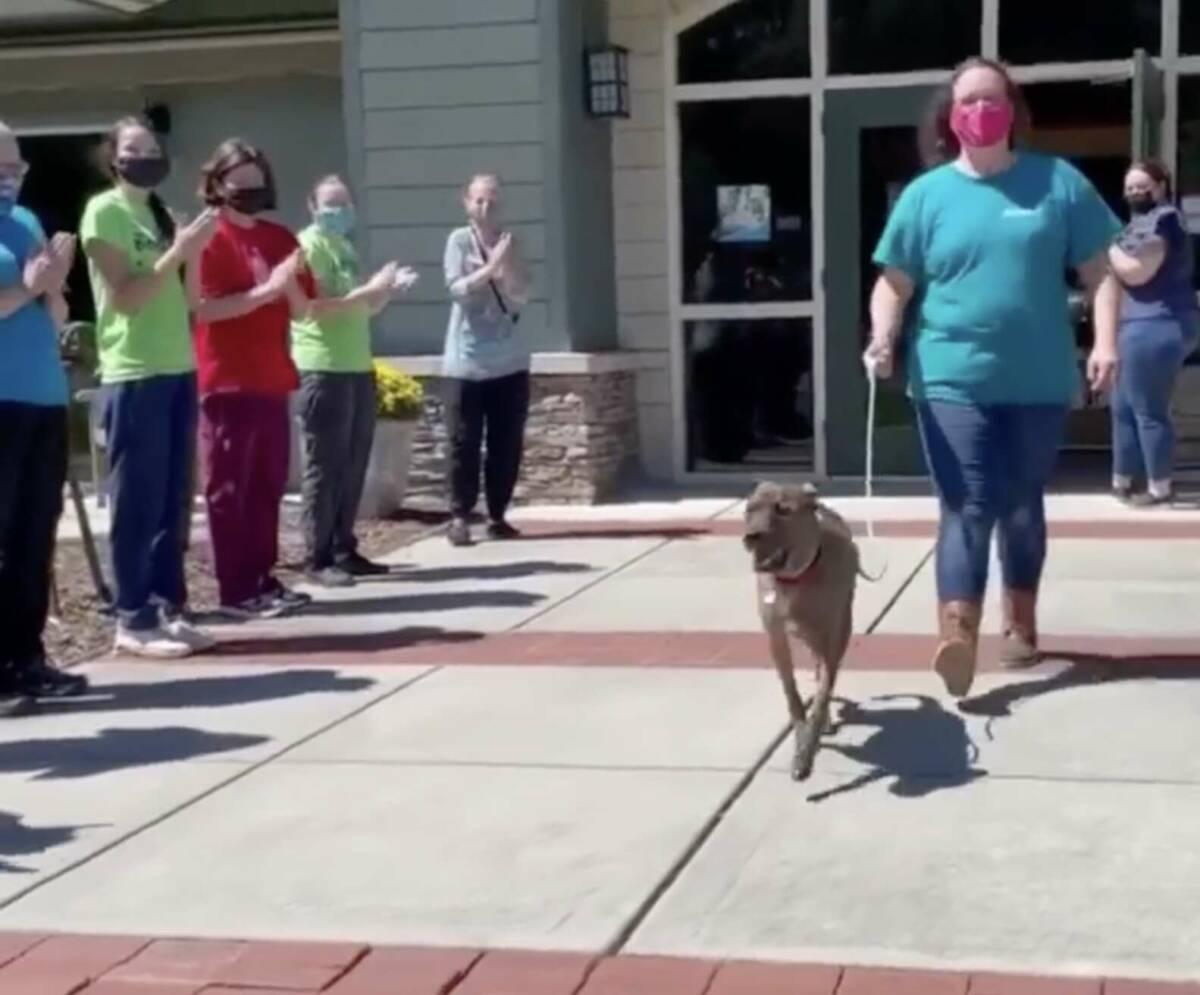Najdłuższy rezydent schroniska otrzymał owację na stojąco, gdy w końcu został adoptowany
