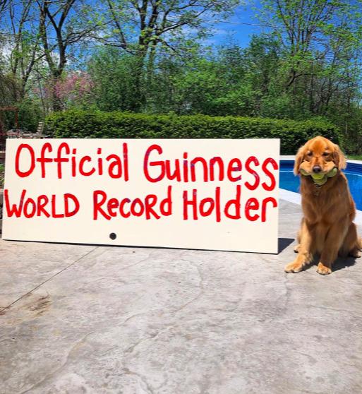 Pies, który potrafi pomieścić w buzi 6 piłek tenisowych, trafił do Księgi Rekordów Guinnessa